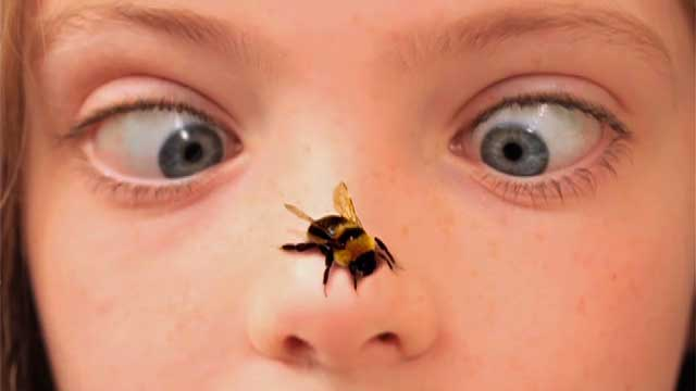 bee on nose
