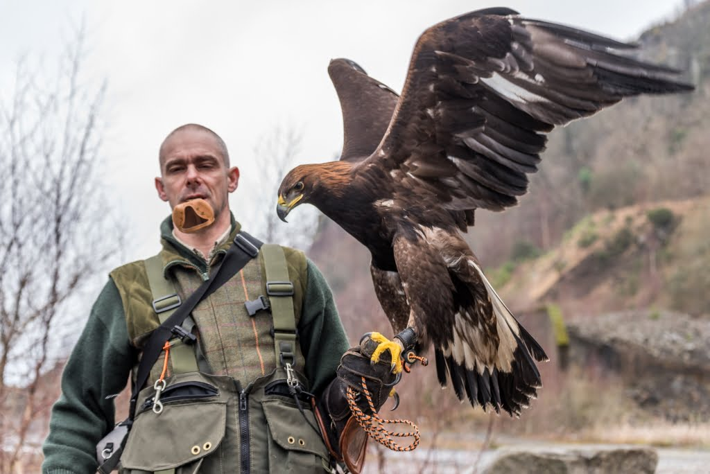 falconer with golden eagle